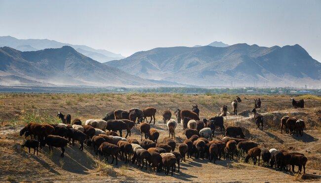 Usbekistans Highlights erleben
