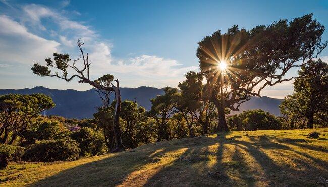 Madeiras Highlights erwandern