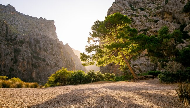 Ruta del Contraban - Mallorcas Schmugglerpfad