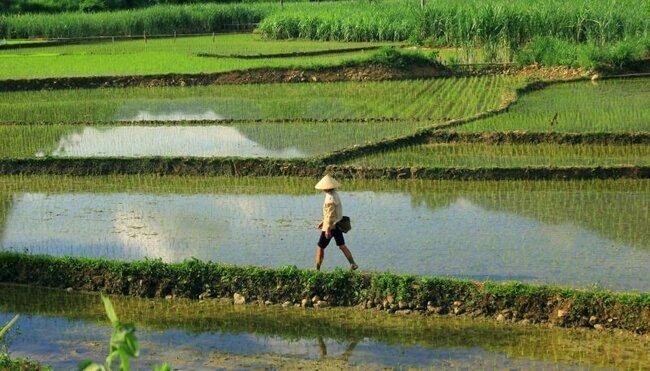 Vietnam für Singles und Alleinreisende