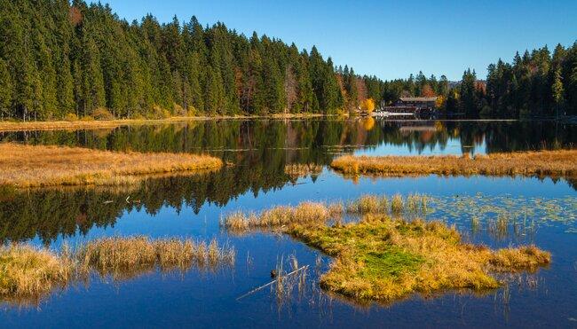 Deutschlands Wildnis - naturnah im Nationalpark Bayerischer Wald