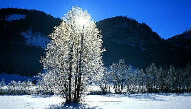 Winter- & Schneeschuhwandern in Tirol