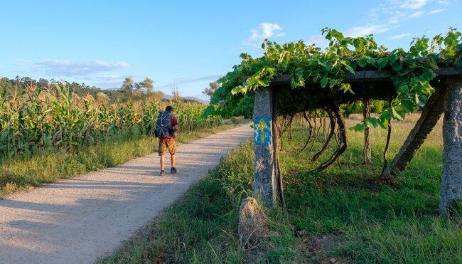 Jakobsweg - Portugiesischer Weg: Porto-Tui - 7 Tage