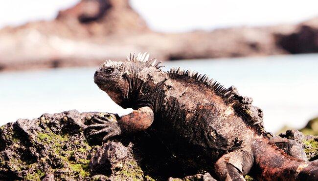 Anden und Galapagos naturnah entdecken
