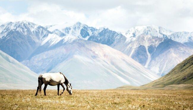 Kirgistan - auf den Spuren der Bergnomaden