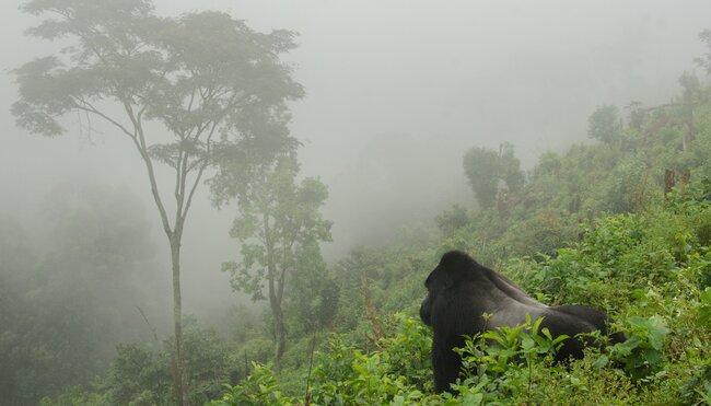 Ruandas und Ugandas Highlights erleben