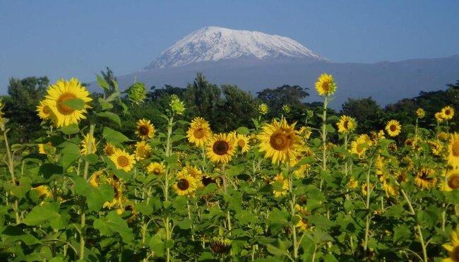 Silvester am Kilimanjaro