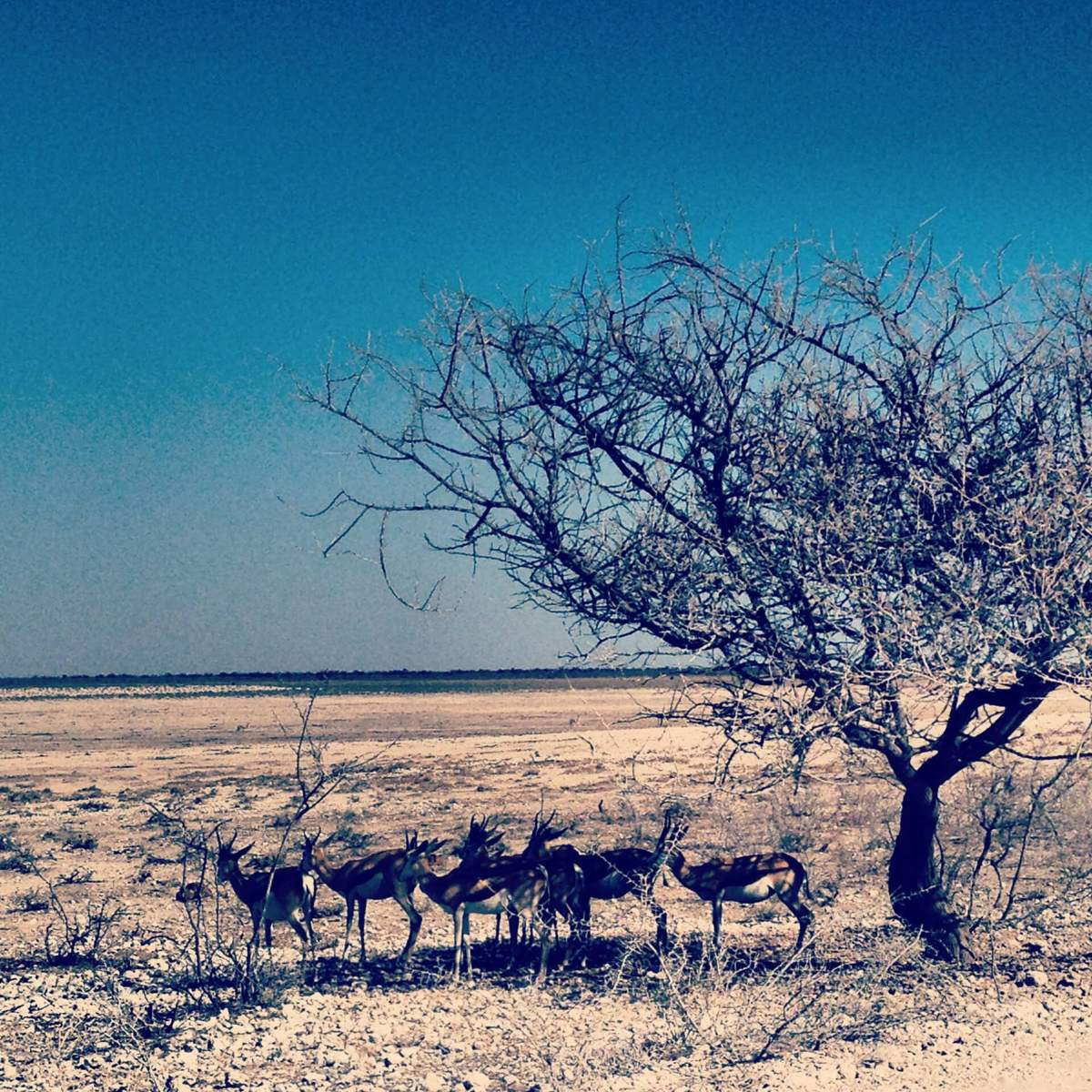 Wildtiere in Namibia