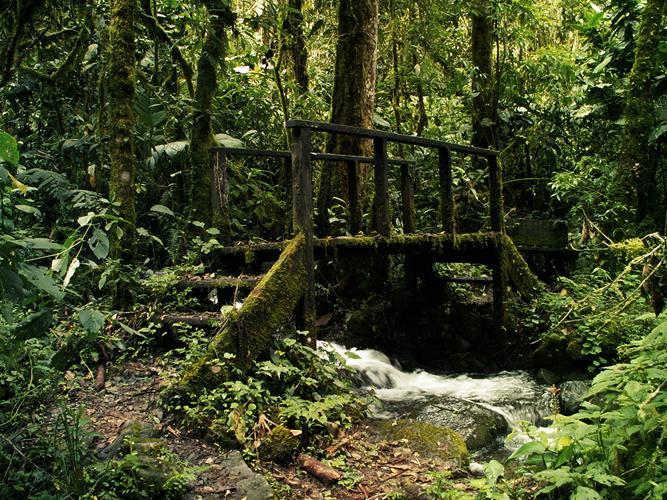 Regenwald der Österreicher Costa Rica