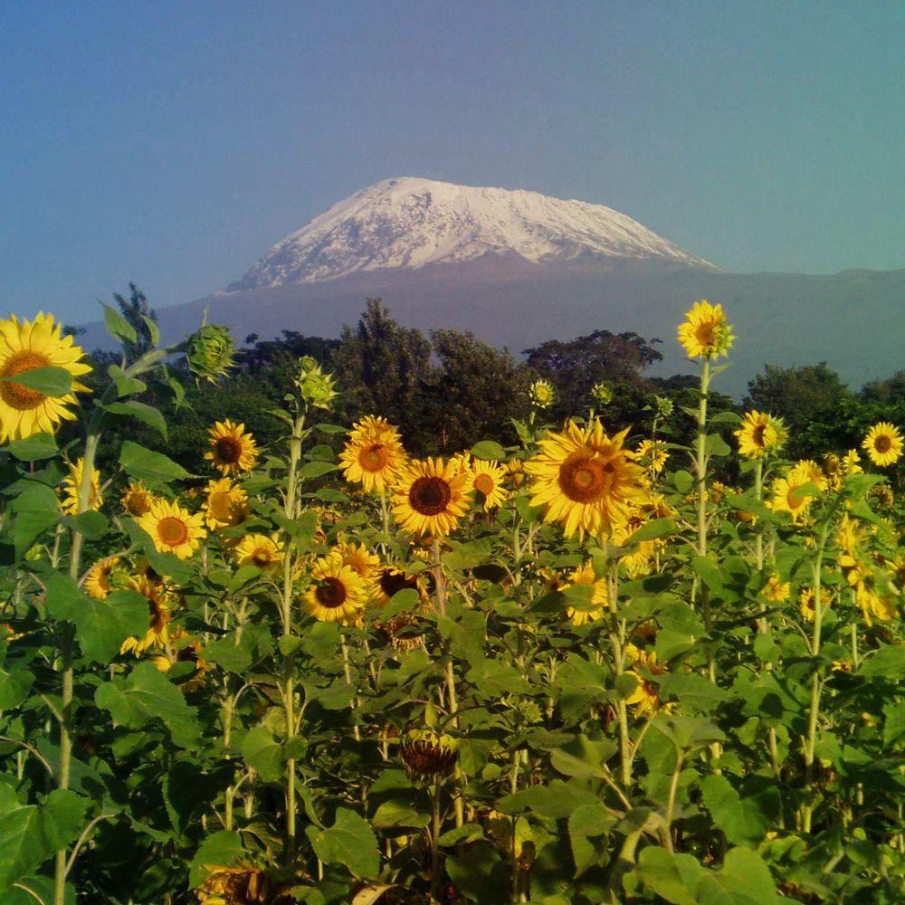 Kilimanjaro-compressor