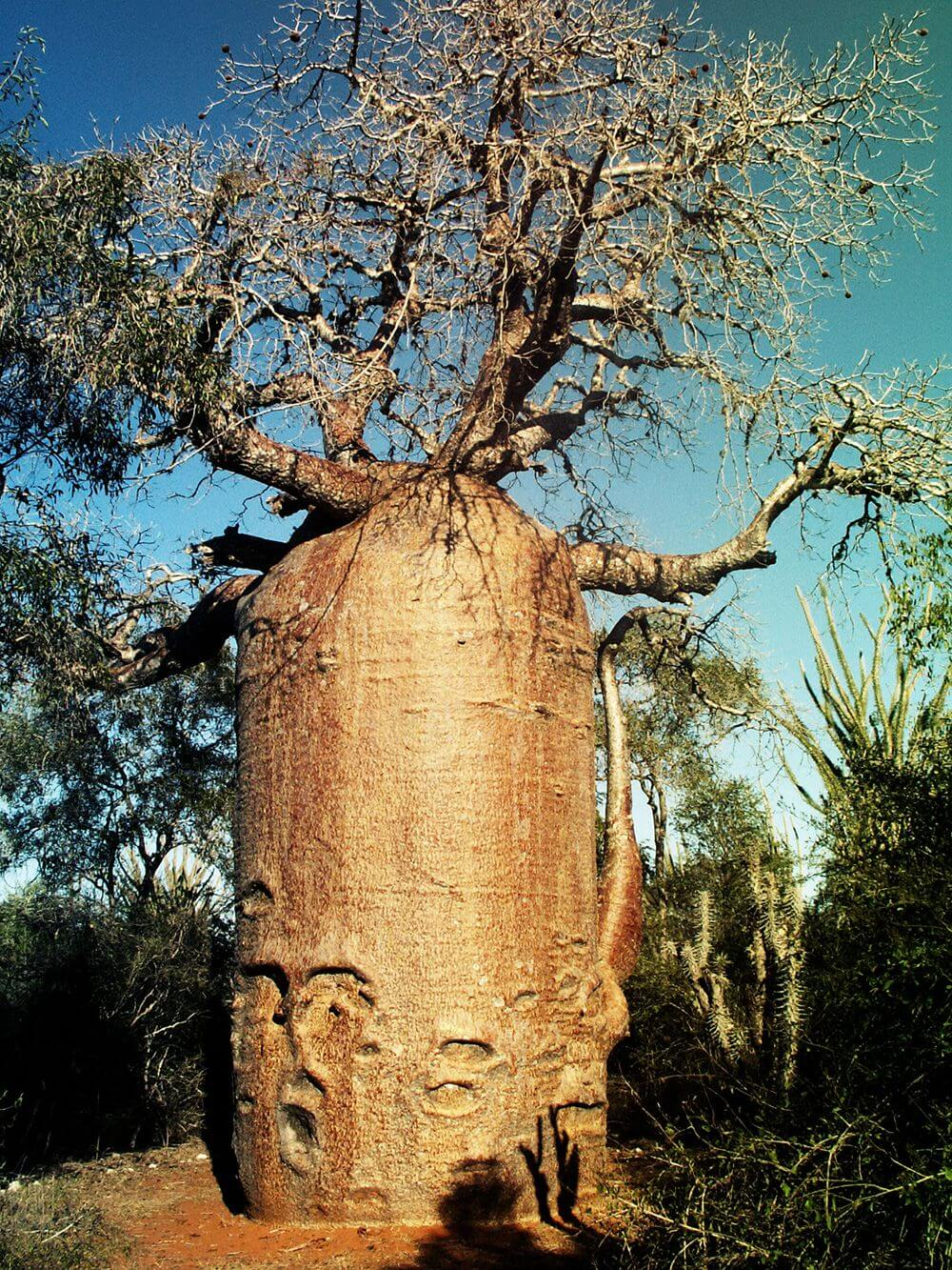 Madagaskar - Tag des Waldes