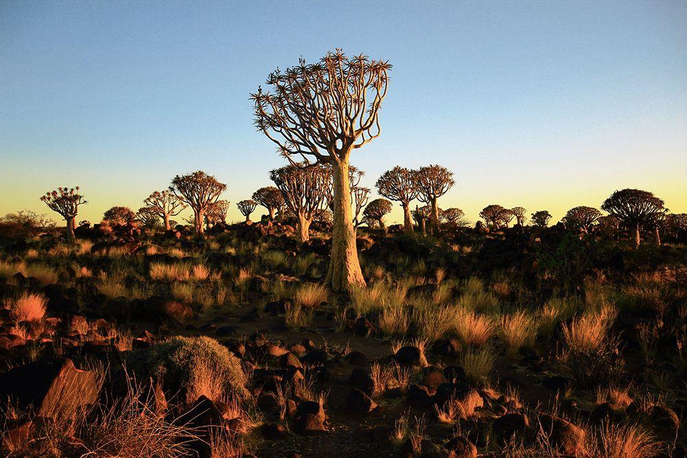 Köcherbaumwald Namibia