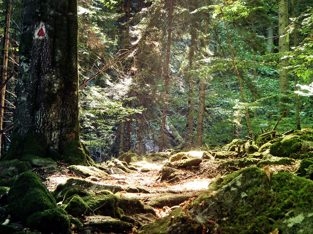 Rumänien Tag des Waldes