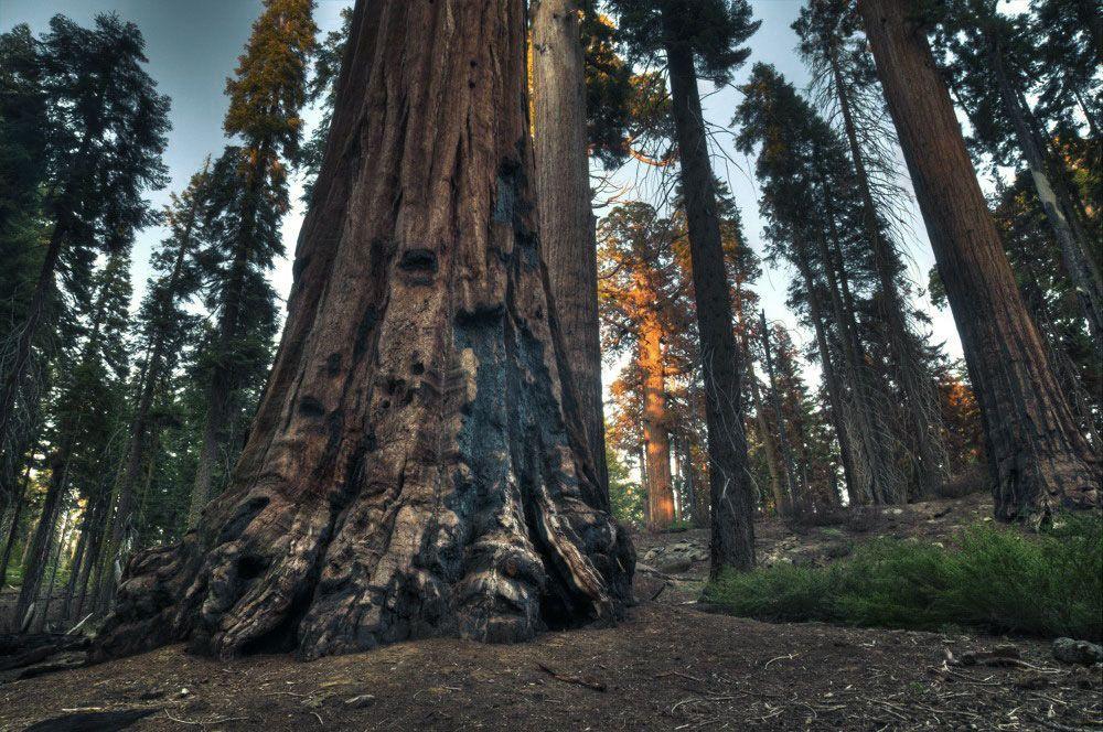 Küsten Sequoie Kalifornien Wald