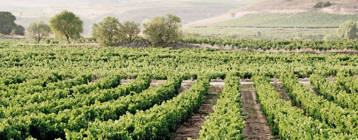 La Rioja auf stillen Wegen