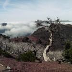 Madeira ein ganzjahres Ziel
