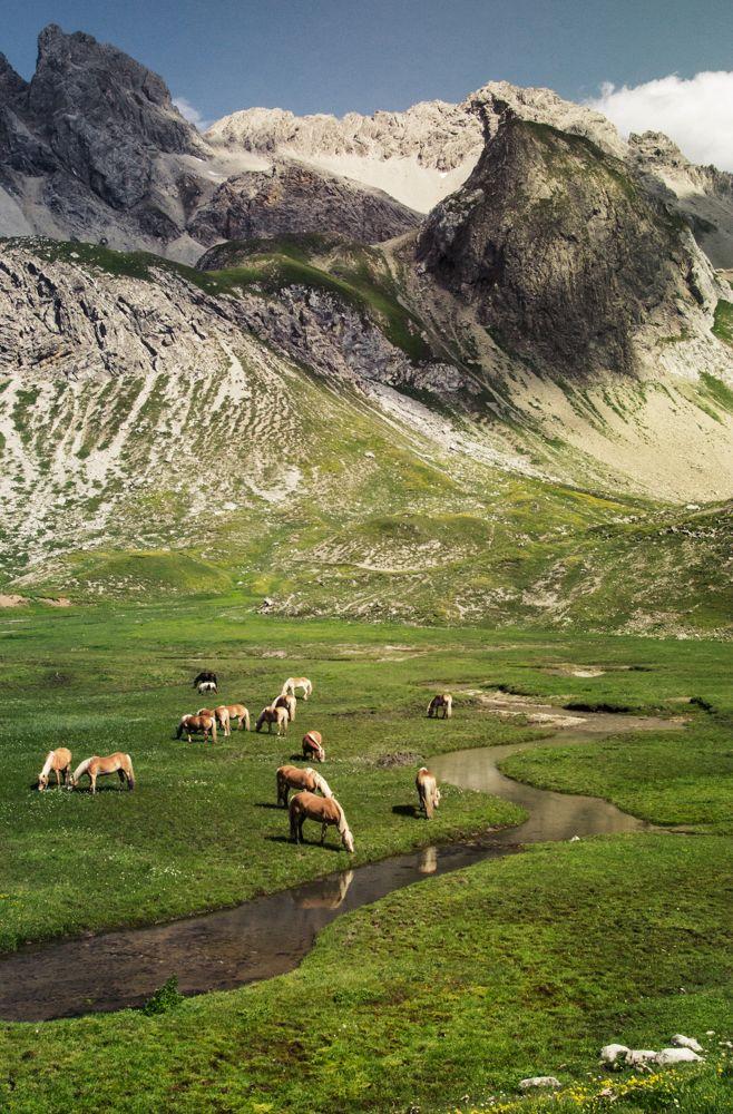 Die Pferde an der Memminger Hütte am E5