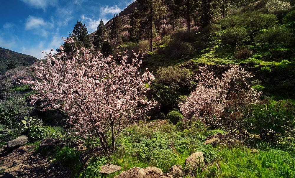 rosa-weiß farbene Blüten an Bäumen auf grünem Hügel