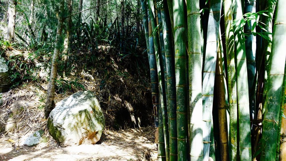 Wälder La Réunion