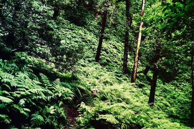 La-Palma---Lorbeerwälder