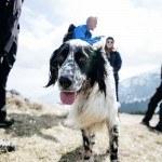 Der Hund von Oliviero