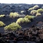 Der Vulkanismus ist zu erkennen auf La Palma