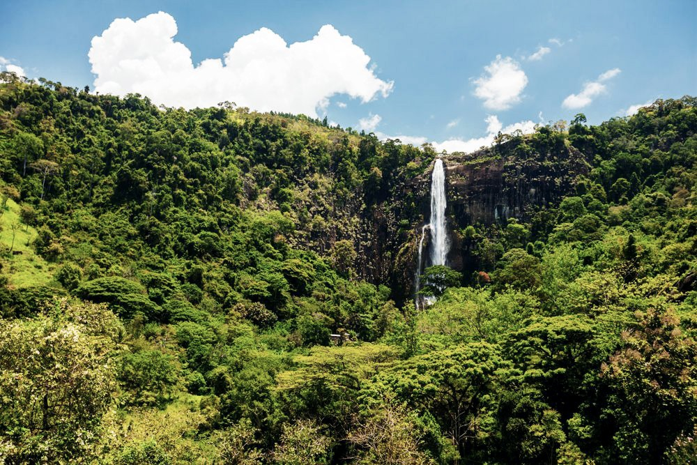 Dschungel Sri Lanka