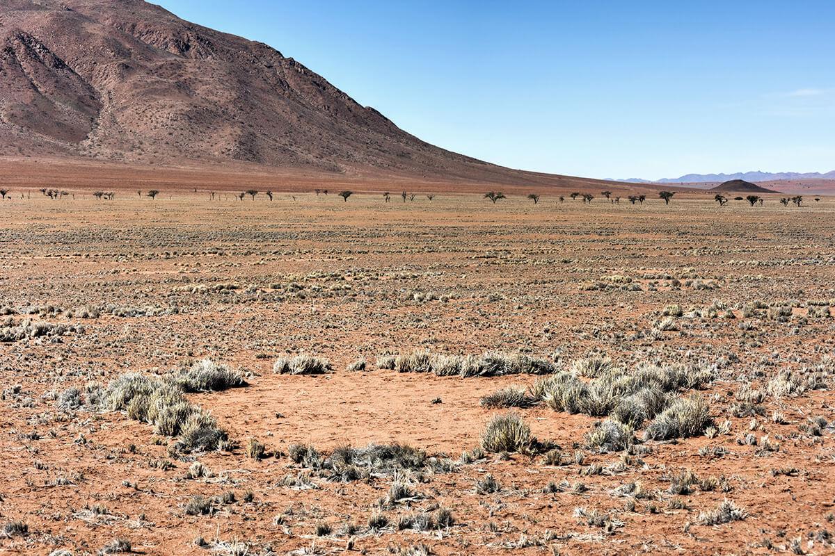 Feenkreis in der Wüste Namibias
