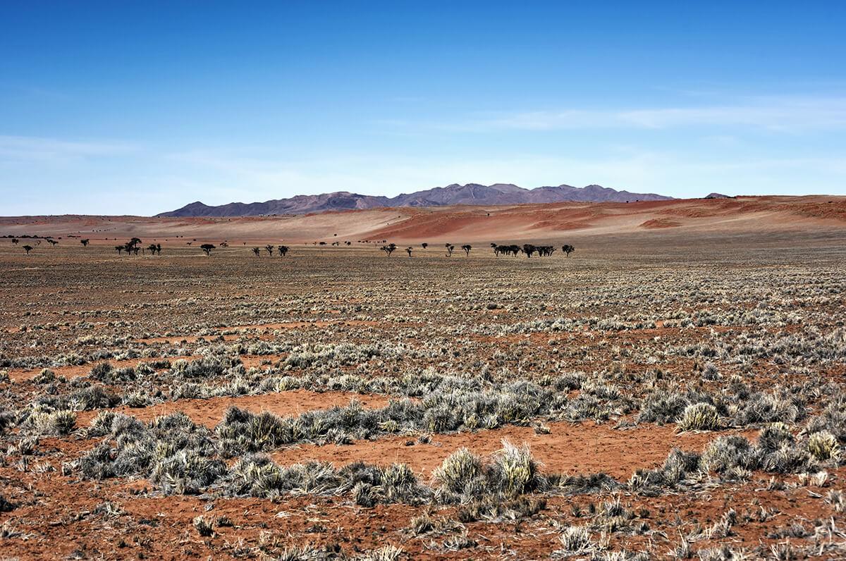 Feenkreise in der Wüste Namibias