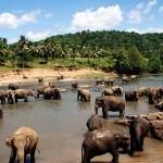 elefanten-sri-lanka