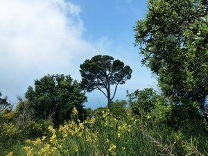 Amalfiküste Wandern