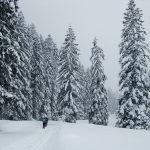Langlaufwoche Tirol