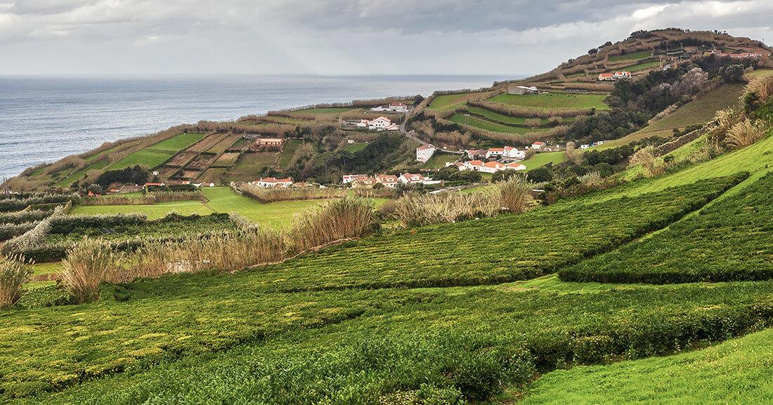 Azoren Teeplantagen