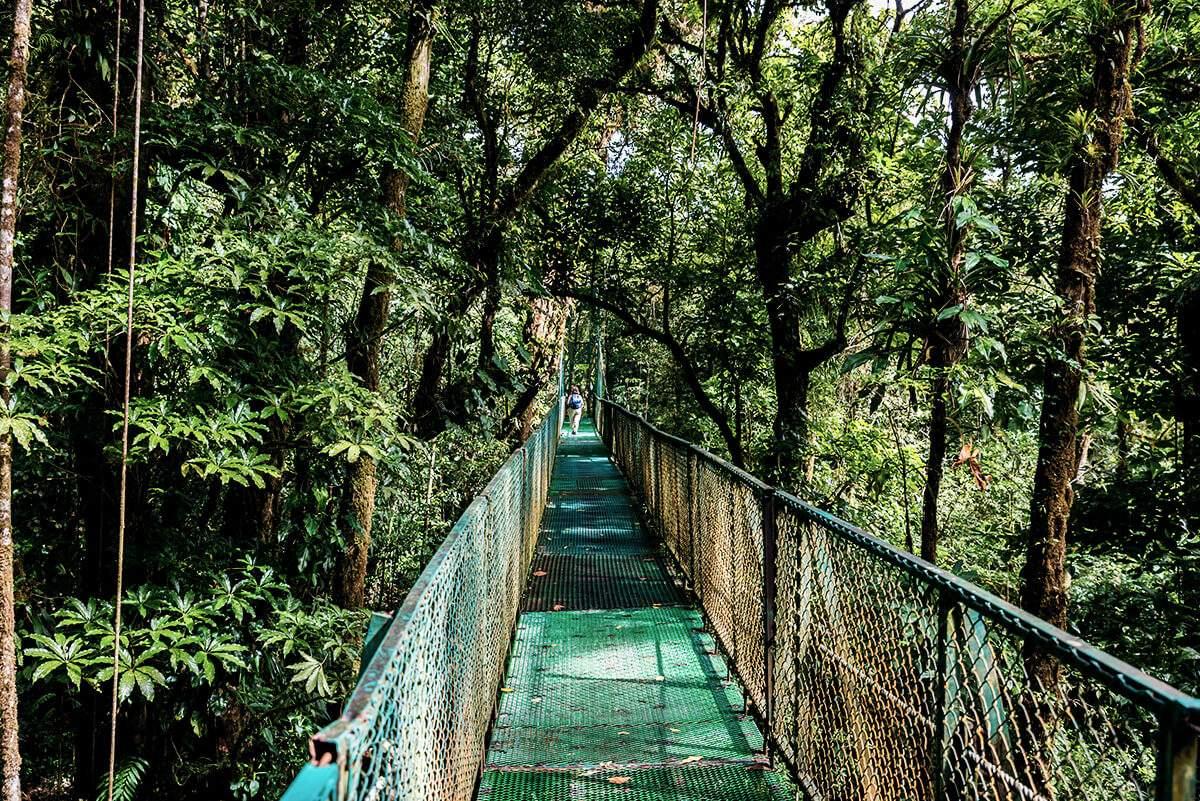 In der Nebelwaldregion Monteverde tummeln sich eine Vielzahl an Tierarten herum.