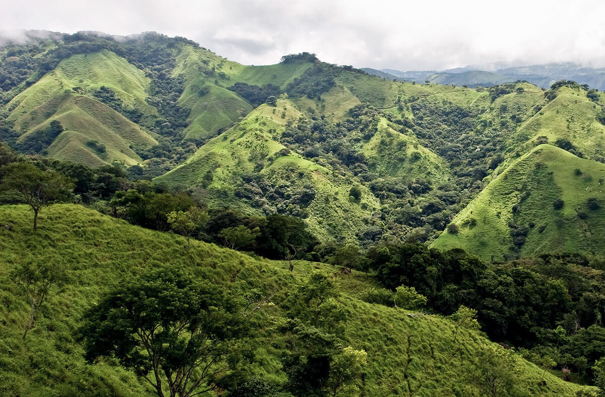 Die grünen Hügel des Monteverde Nationalpark