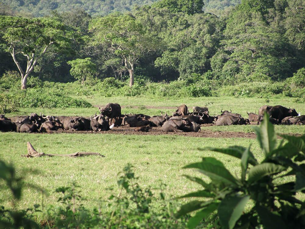 Fauna Tansania