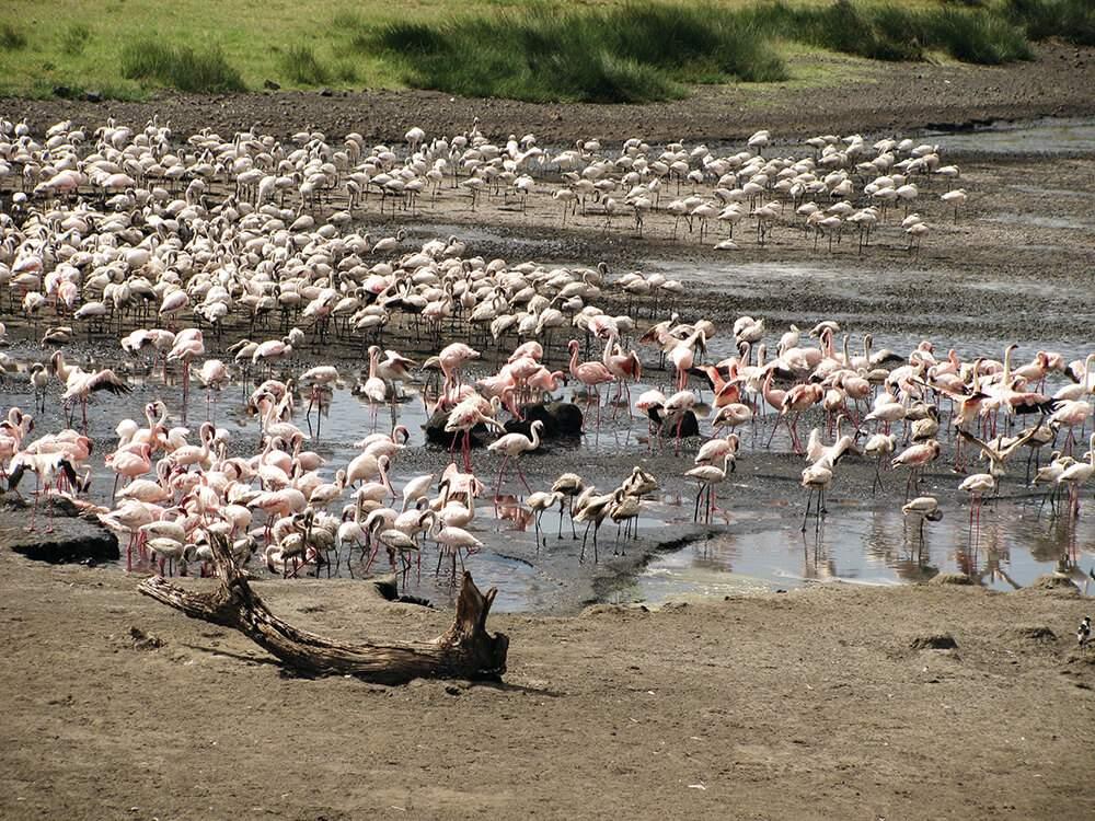 Tierwelt Tansania
