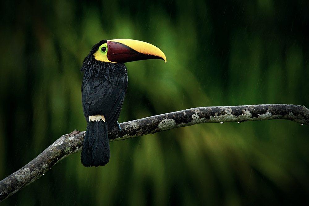 Fauna Nicaragua
