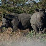 Simbabwe Safari