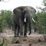 Simbabwe Wildtiere