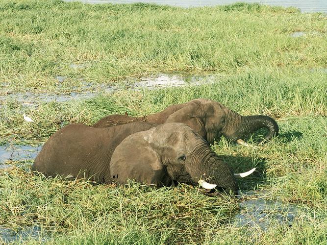 Nationalparks Südliches Afrika