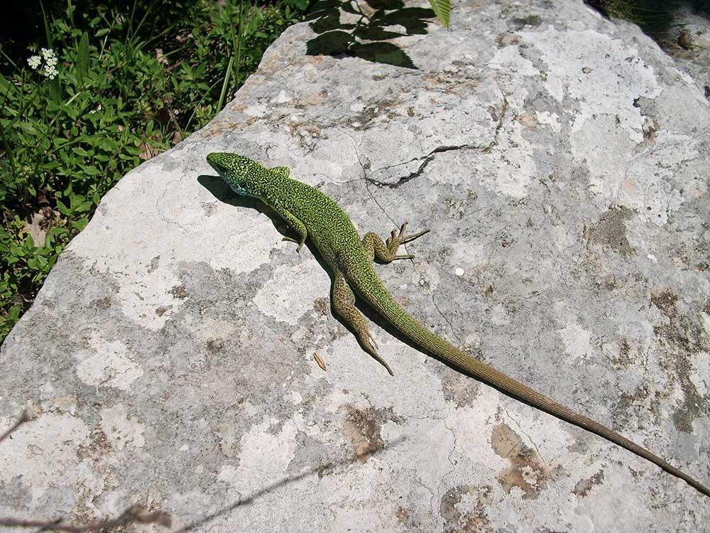 Fauna Montenegro