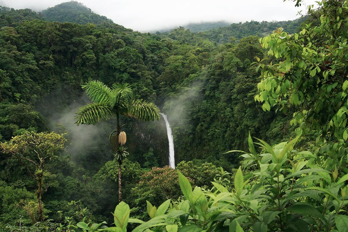 Wasserfall und grüne Bäume