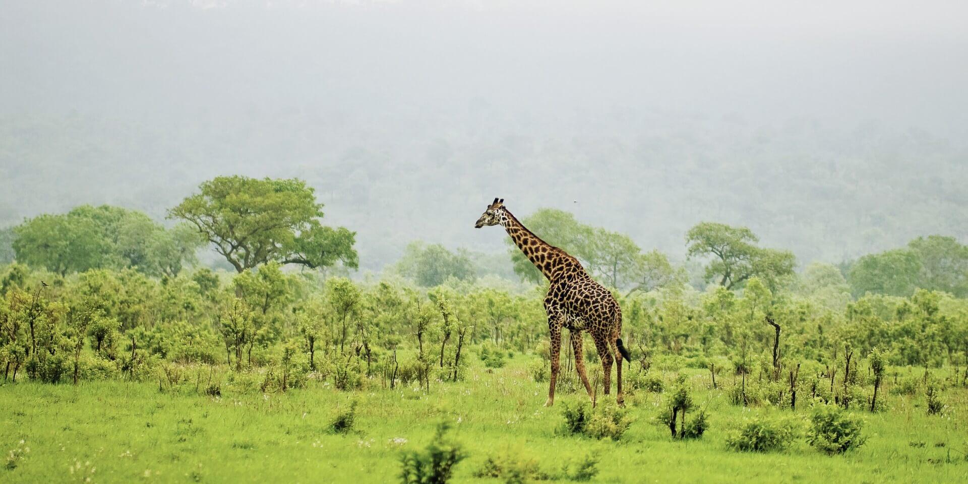 Header_Giraffe