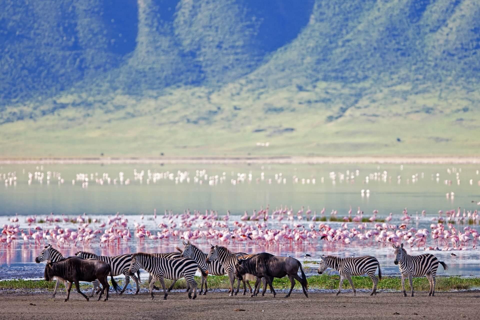 Ngorongoro Crater_Zebras Gnus