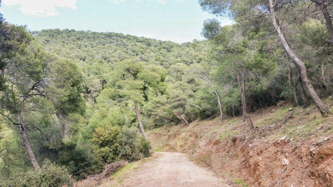 ein breiter Wanderpfad in einem Wald