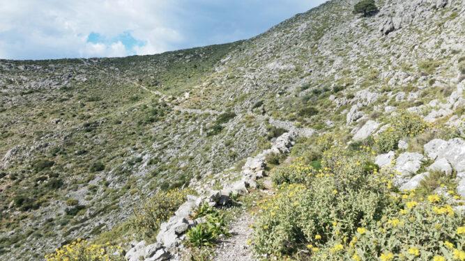 Steiniger schmaler Pfad an einer Bergwand, gelbe Blumen am Wegesrand