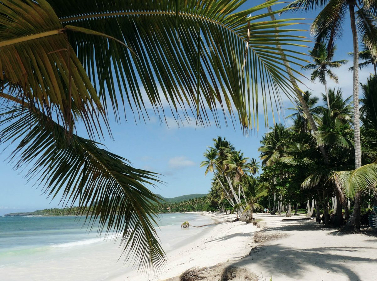 Palmen, Sand und Meer