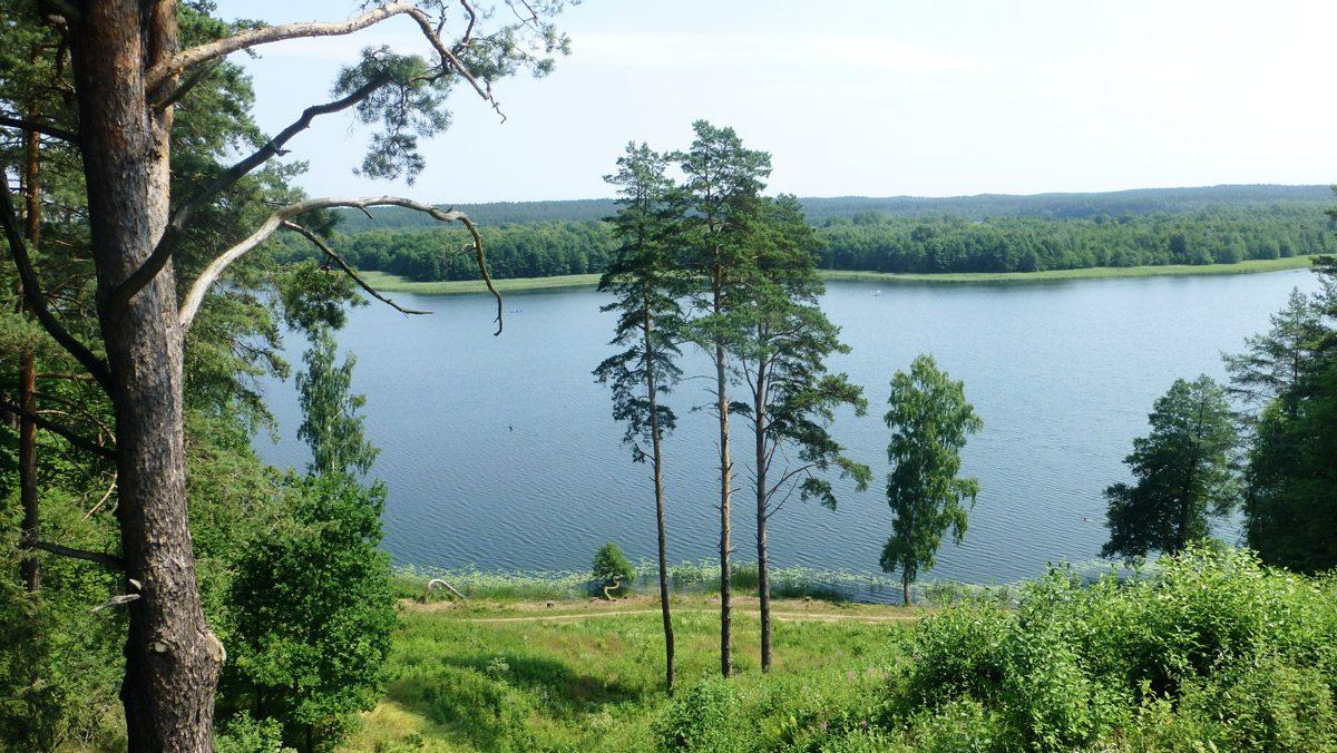 Wald und See
