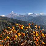 Orangene Blumen vor einer Bergkulisse. Blauer Himmel